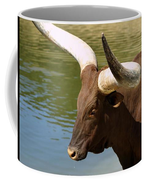 Animal Coffee Mug featuring the photograph Watusi Bull by Richard Thomas