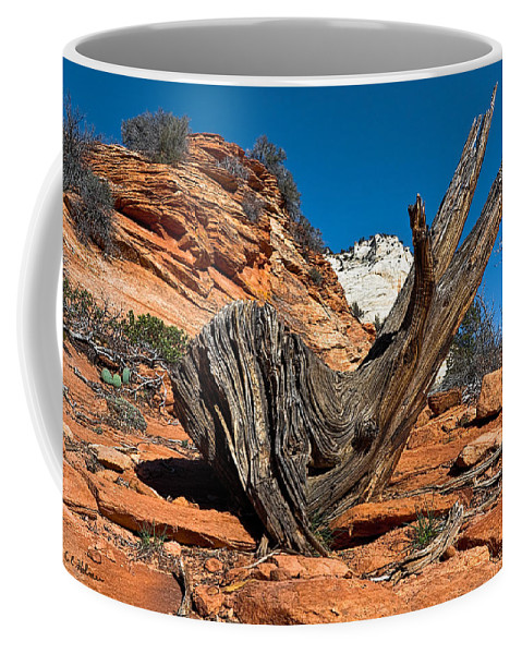 Coffee Mug featuring the photograph Weathered Check by Christopher Holmes