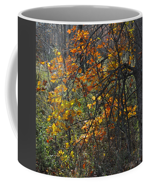 Fall Coffee Mug featuring the photograph Web Of Color by Tim Nyberg