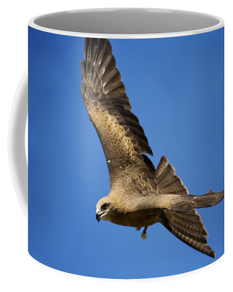 Eagle Coffee Mug featuring the photograph Wedgetail Eagle Flight by Mike Dawson