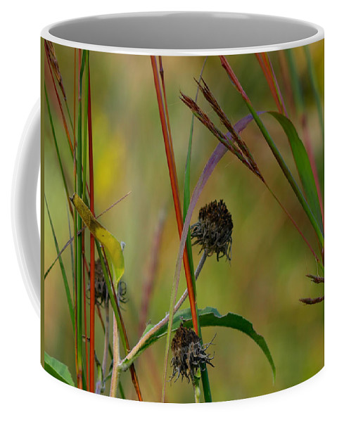 Ann Keisling Coffee Mug featuring the photograph Weeds by Ann Keisling