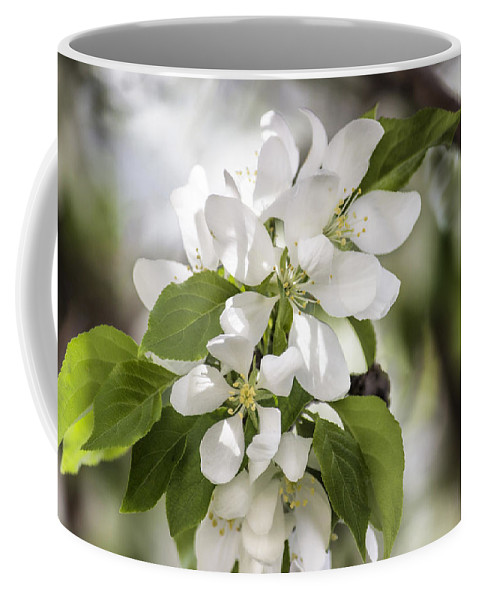 Flower Coffee Mug featuring the photograph Welcoming Spring by Becca Buecher