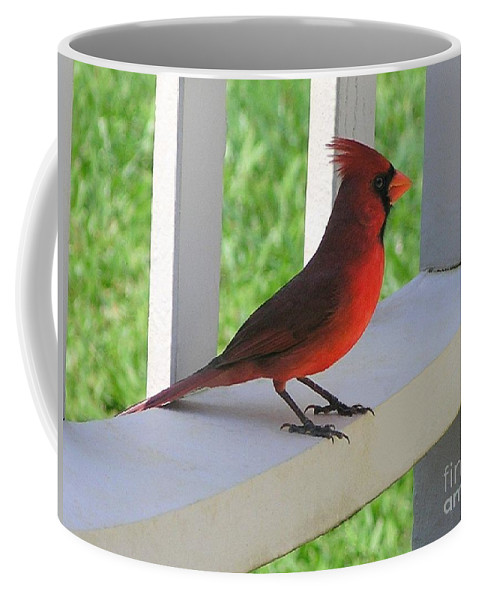 Mary Deal Coffee Mug featuring the photograph Western Cardinal by Mary Deal