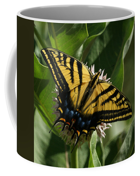 Bugs Coffee Mug featuring the photograph Western Tiger Swallowtail 2 by Ernie Echols