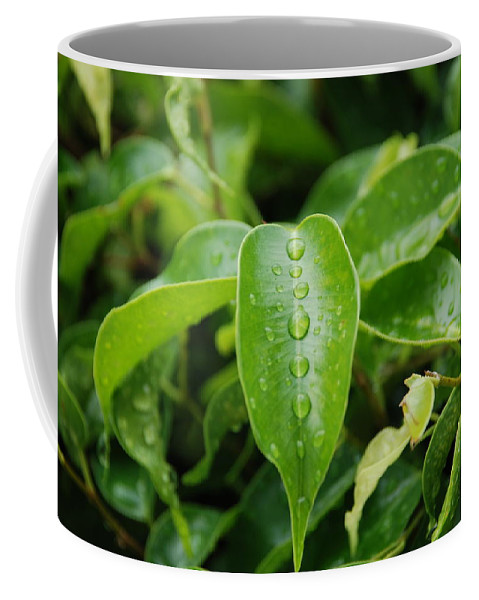 Macro Coffee Mug featuring the photograph Wet Bushes by Rob Hans