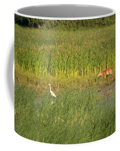 Great Egret Coffee Mug featuring the photograph Wetland Life by Linda Kerkau