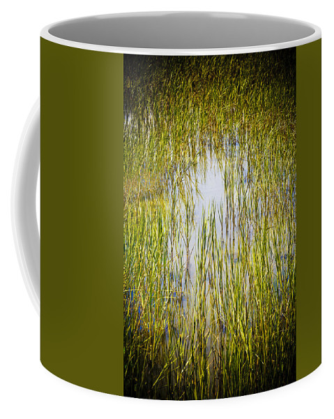 Wetlands Coffee Mug featuring the photograph Wetlands by Marilyn Hunt
