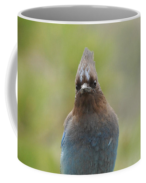 Bird Coffee Mug featuring the photograph Whadda You Lookin At by Donna Blackhall