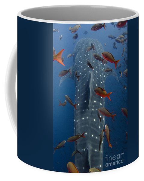 Mp Coffee Mug featuring the photograph Whale Shark Galapagos Islands by Pete Oxford