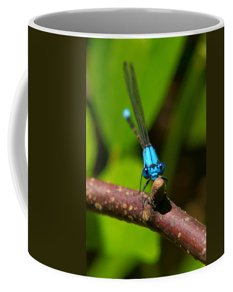 Insects Coffee Mug featuring the photograph What Are You Looking At by Frank Pietlock