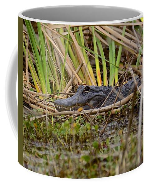 Gator Coffee Mug featuring the photograph What Big Teeth You Have by Carol Bradley