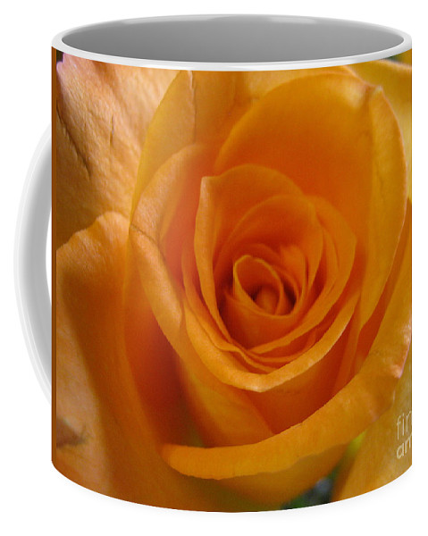 Rose Coffee Mug featuring the photograph What Is In A Rose? by Cristina Marie
