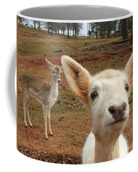 Deer Coffee Mug featuring the photograph What Is That by Robert Meanor