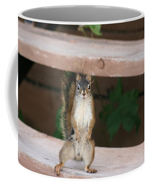 Squirrel Mother Nature Wild Animal Cute Dancing Coffee Mug featuring the photograph What You Lookin At by Andrea Lawrence