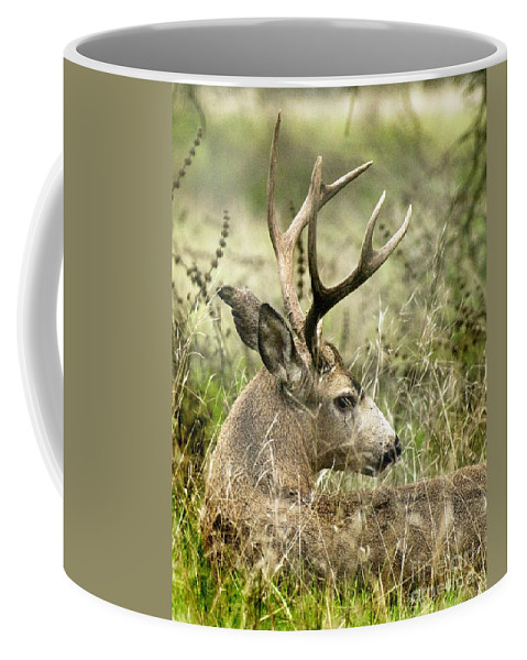 California Scenes Coffee Mug featuring the photograph Whats The Point by Norman Andrus
