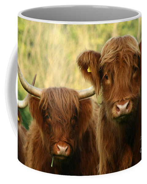 Cow Coffee Mug featuring the photograph Whats Up by Angel Ciesniarska