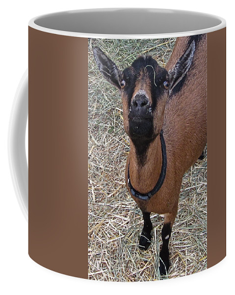 Photograph Of Goat Coffee Mug featuring the photograph Whats Up Doc by Gwyn Newcombe