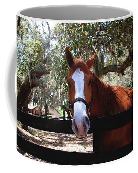Horse Coffee Mug featuring the photograph Whats Your Name by Susanne Van Hulst