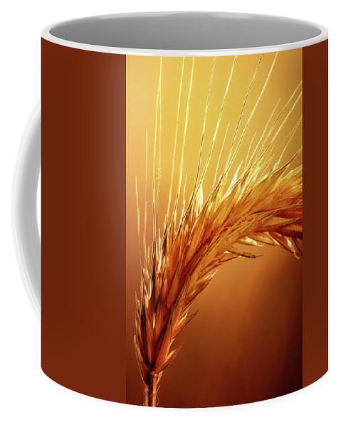 Wheat Coffee Mug featuring the photograph Wheat Close-up by Johan Swanepoel