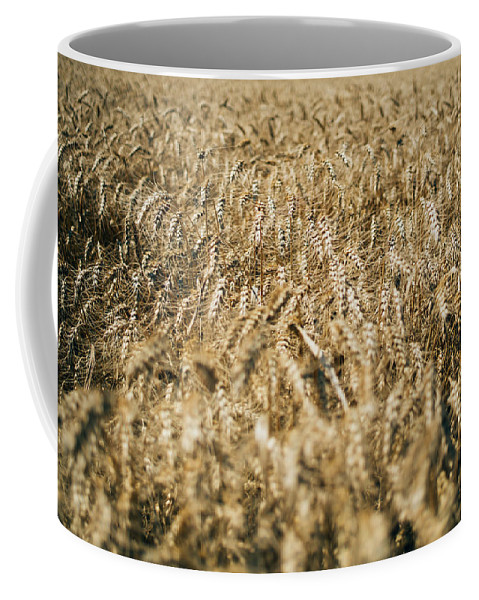 Wheat Coffee Mug featuring the photograph Wheat In The Wind by Pati Photography