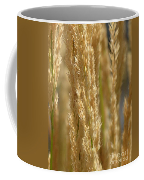 Wheat Coffee Mug featuring the photograph Wheat Stalks by Diane Greco-Lesser