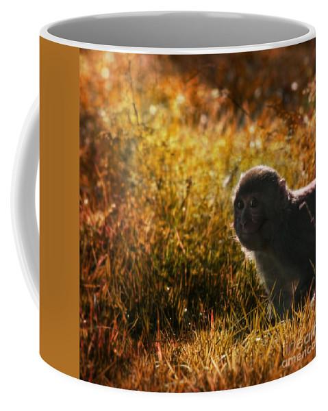 Monkey Coffee Mug featuring the photograph Where Are You My Precious by Angel Ciesniarska