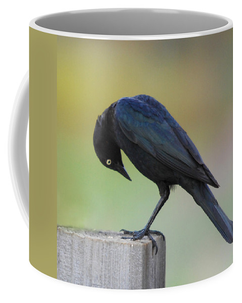 Black Bird Coffee Mug featuring the photograph Where Did It Go by Donna Blackhall