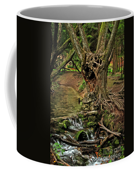 Ent Coffee Mug featuring the photograph Where The Ents Are by Angel Ciesniarska