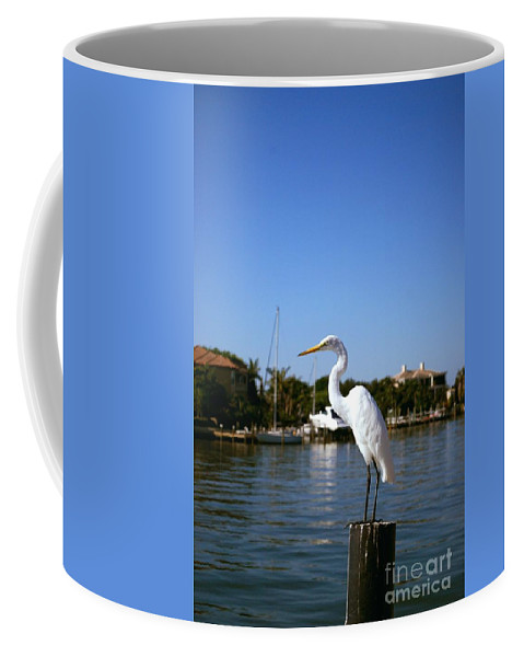 Egret Coffee Mug featuring the photograph Where's Lunch by Gary Wonning