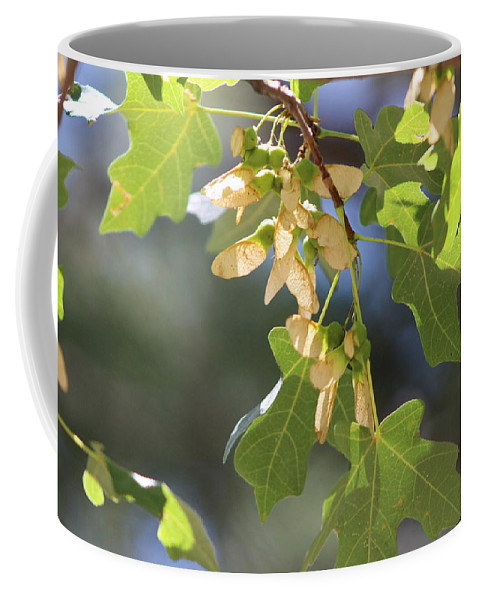 Field Maple Coffee Mug featuring the photograph Whirligigs on Field Maple in New Mexico by Colleen Cornelius