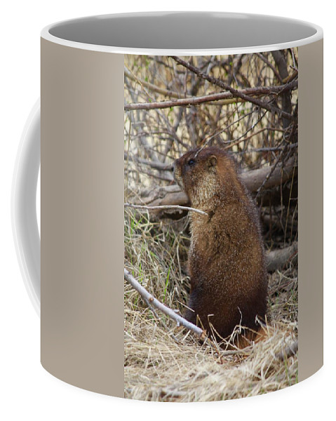 Marmot Coffee Mug featuring the photograph Whistle Pig by Anne Marie LaSala