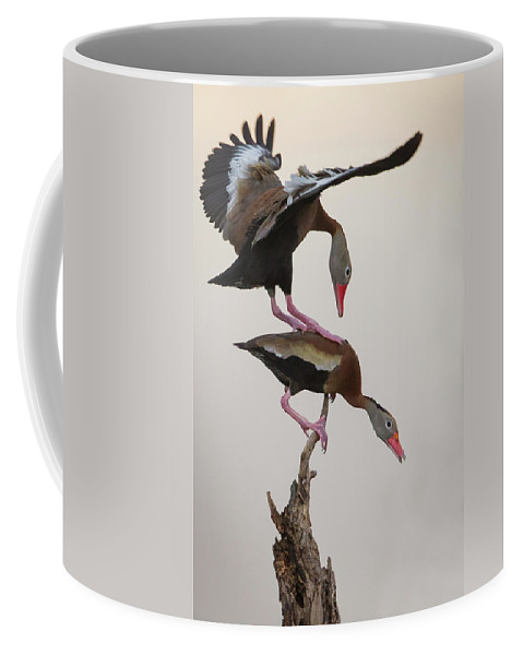Whistling Duck Coffee Mug featuring the photograph Whistling Duck Ballet by Rhoda Gerig
