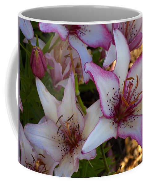 Lilies Coffee Mug featuring the photograph White And Pink Lilies by William Tasker