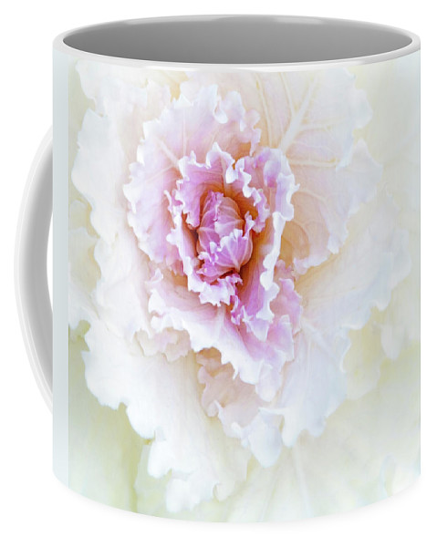 Kale Coffee Mug featuring the photograph White And Pink Ornamental Kale by Mitch Spence