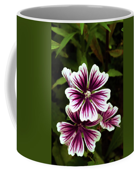 Flowers Coffee Mug featuring the photograph White And Purple by Sherman Perry