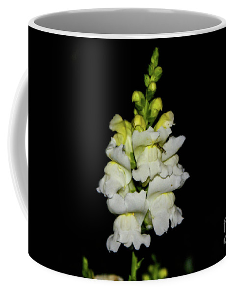 White Coffee Mug featuring the photograph White And Yellow Snapdragon by Kevin Gladwell