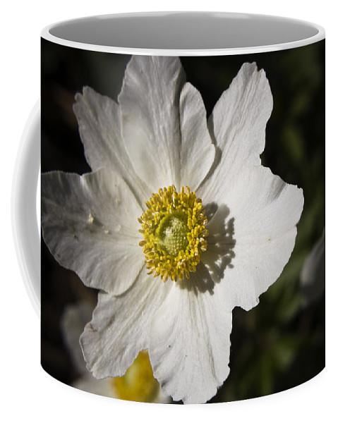 Flower Coffee Mug featuring the photograph White Anemone by Teresa Mucha