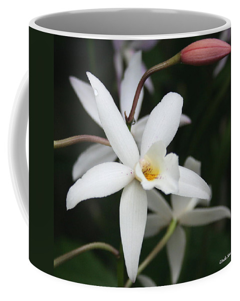 Flowers Nature White Macro Orchid Greenhouse Digital Photography Coffee Mug featuring the photograph White Beauty Dove by Linda Sannuti