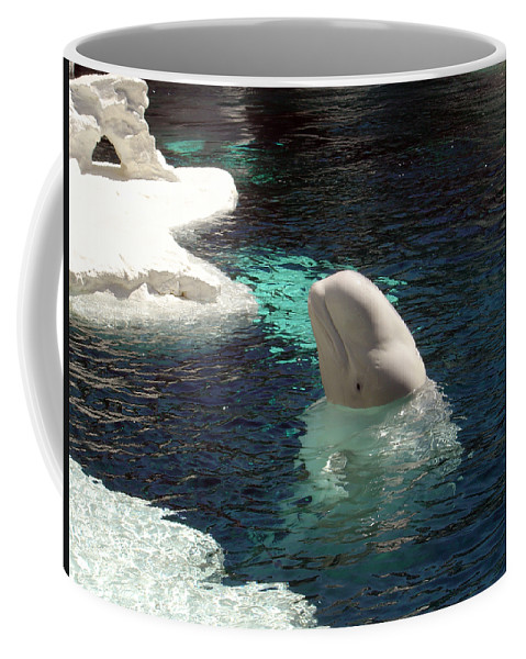 Whale Coffee Mug featuring the photograph White Beluga Whale 3 by Angelina Vick