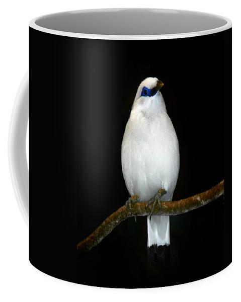Bird Coffee Mug featuring the photograph White Bird by Anthony Jones