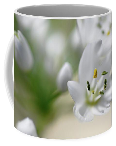 Lachish Coffee Mug featuring the photograph White Blossom 2 by Dubi Roman