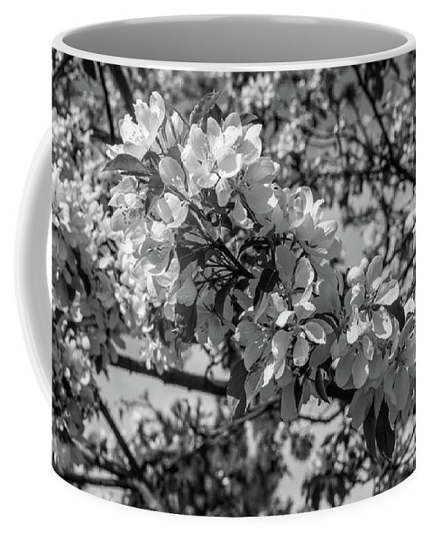 Black And White Coffee Mug featuring the photograph White Blossoms In Black And White by Michael Putthoff