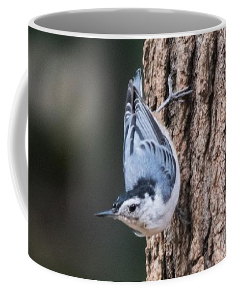 White-breasted Nuthatch Coffee Mug featuring the photograph White-breasted Nuthatch by Mary Ann Artz