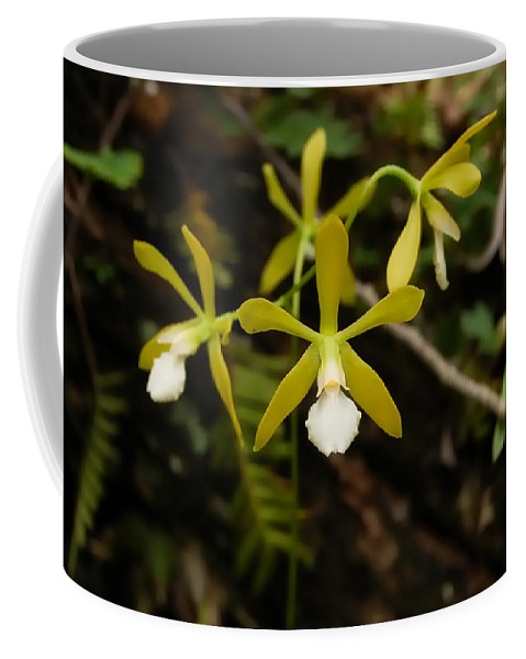 Orchid Coffee Mug featuring the photograph White Butterfly Orchid by Rich Leighton
