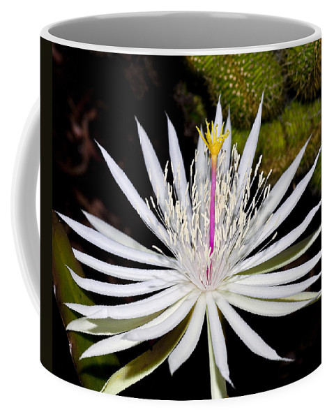 White Flowers Coffee Mug featuring the photograph White Cactus Flower by Kelley King