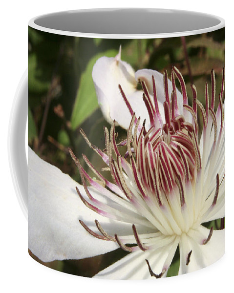Clematis Coffee Mug featuring the photograph White Clematis Henryi by Margie Wildblood
