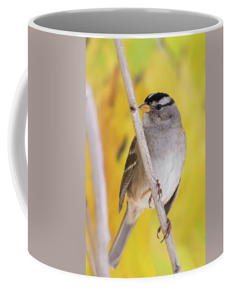 White Crowned Sparrow Coffee Mug featuring the photograph Golden Abstraction by Tran Boelsterli
