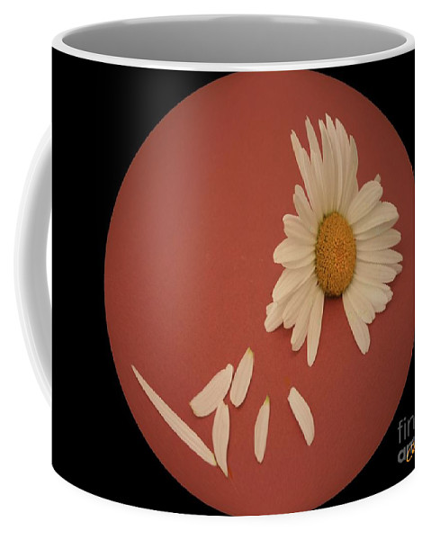 Daisies Coffee Mug featuring the photograph Encapsulated Daisy With Dropping Petals by Jean Clarke