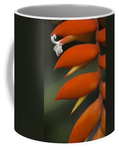Heliconia Coffee Mug featuring the photograph White Flower And Orange by Karen Ulvestad