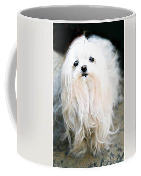 Small Coffee Mug featuring the photograph White Fluff by Marilyn Hunt